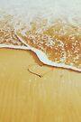 Summer Love by Colleen Farrell