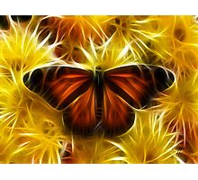 Butterfly on Flowers (soft) Photographic Print