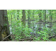 Detroit Swamp - Palmer Park Photographic Print