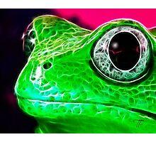 Green Frog Photographic Print