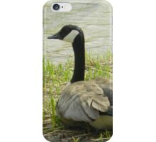 Sitting Goose iPhone Case/Skin