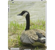 Sitting Goose iPad Case/Skin