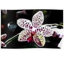 Orchid numero uno Poster