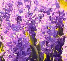 Purple Fields Sticker