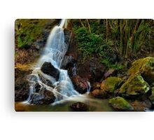 Kondalilla Falls Canvas Print