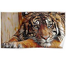Tiger numero dos Poster