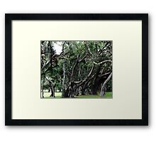 Princess Plantation 16 Framed Print