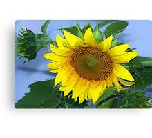 Sunflower yellow Canvas Print
