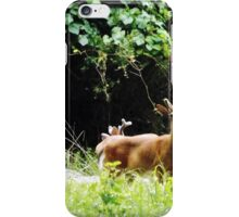 Princess Plantation 19 iPhone Case/Skin