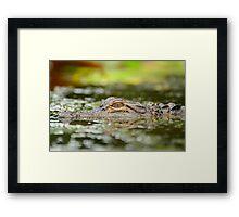Baby Gator Framed Print