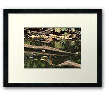 Erithacus rubecula Framed Print