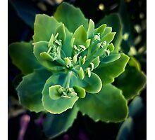 Leafage Photographic Print