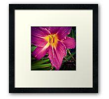 Flower 30 Framed Print