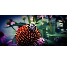 Bumble Bee Tuna Photographic Print