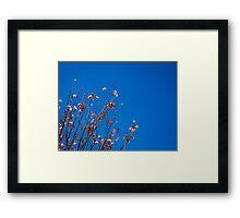 San Francisco Flowers Framed Print