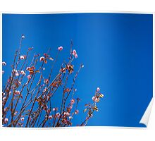 San Francisco Flowers Poster