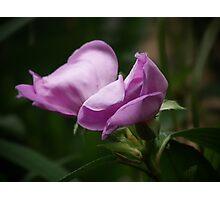 Purple Beauty By Matthew Lys Photographic Print