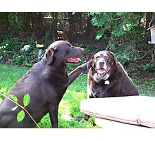 Lab loyalty Photographic Print