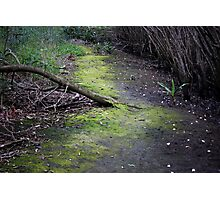Unknown Path By Matthew Lys Photographic Print