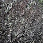 Sea Of Branches By Matthew Lys by Access Arts Camera Wonderers