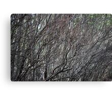 Sea Of Branches By Matthew Lys Canvas Print