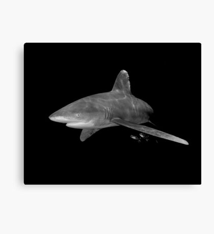 An Oceanic White Tip Shark and Pilot Fish in Black and White Canvas Print