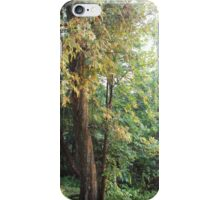Colours Of Trees iPhone Case/Skin