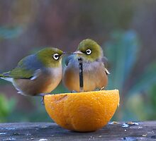 Love is.......Two on an orange......! by Roy  Massicks