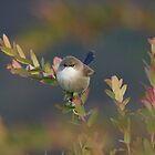Angry Bird by Alex Colcheedas