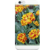 Two-Tone Orange Tulips Vignette iPhone Case/Skin