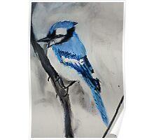 Blue Jay Wild Bird Acrylic On Canvas Board Poster