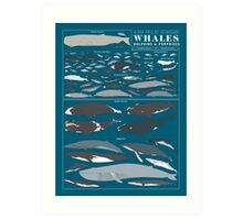 A SEA FULL OF CETACEANS: WHALES, DOLPHINS, AND PORPOISES Art Print