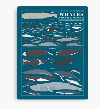 A SEA FULL OF CETACEANS: WHALES, DOLPHINS, AND PORPOISES Canvas Print