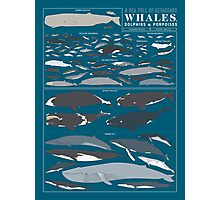 A SEA FULL OF CETACEANS: WHALES, DOLPHINS, AND PORPOISES Photographic Print