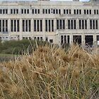 Beach Grass at the Power Station by kalaryder