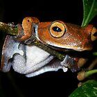 The Vampire Flying Frog  by Jodi Rowley