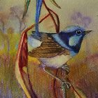 Superb Fairy Wren  by sandysartstudio