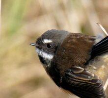 Natures Little Poser - Fantail - NZ Sticker