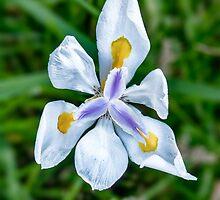 Floral_June_16_01 by ArtProphet