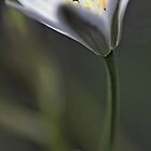 Wildflower - Late Afternoon Light by T.J. Martin