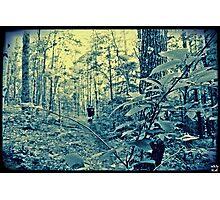 Follow The Path Photographic Print