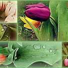 Natures Paintbrush by shelleybabe2
