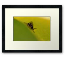 There's a Fly on the Greens Framed Print