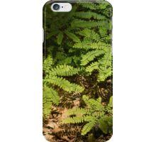 Sunlit Forest Floor Treasures iPhone Case/Skin