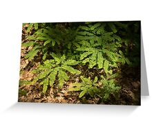 Sunlit Forest Floor Treasures Greeting Card