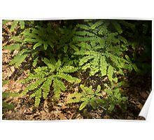 Sunlit Forest Floor Treasures Poster