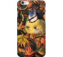 Young blue tit on acer palmatum  iPhone Case/Skin