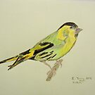 Siskin Drawing by CreativeEm