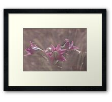Delicate Pink Lilies Framed Print