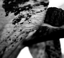 Veins  by Nicole Sedlacek